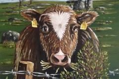 Burren-Cow.